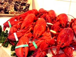 valentine's day lobsters