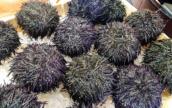 try a sea urchin